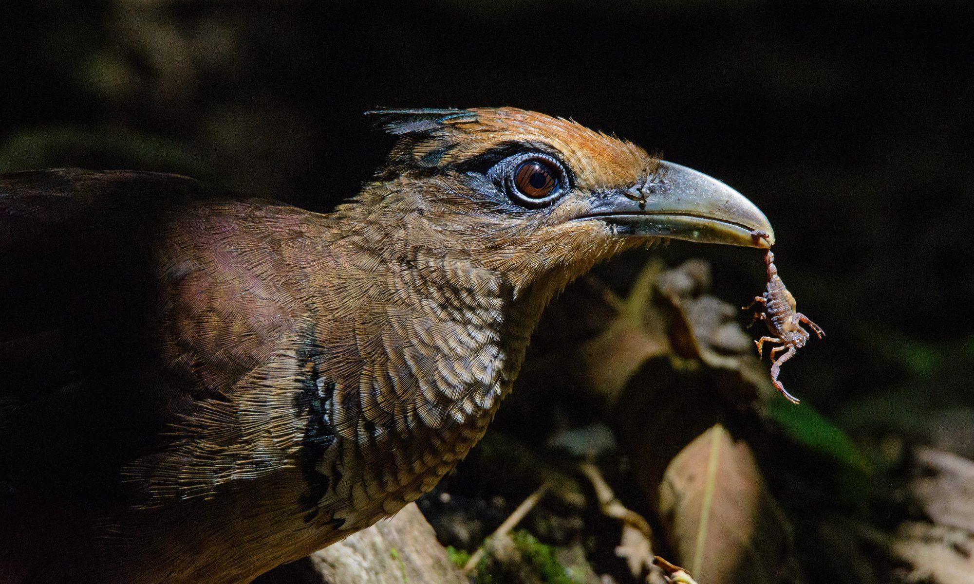 Dylan Vasapolli's birding world